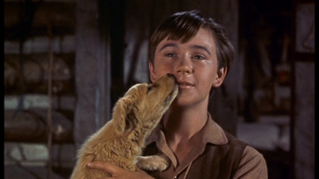 """Tommy Kirk in """"Old Yeller"""" (1957)"""