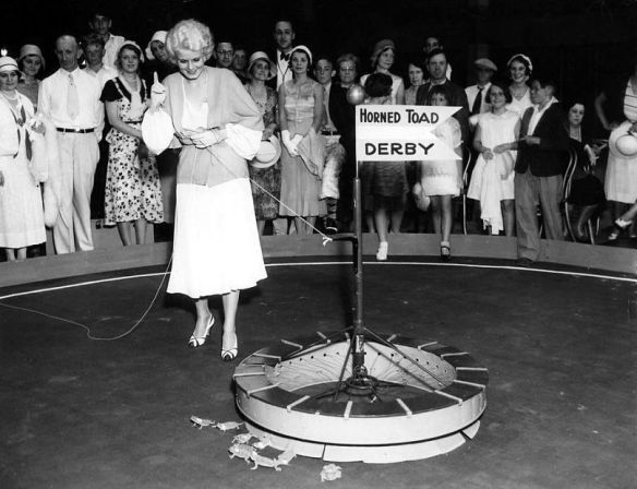 Harlow lets out toads for a Horned Toad Derby in 1931.